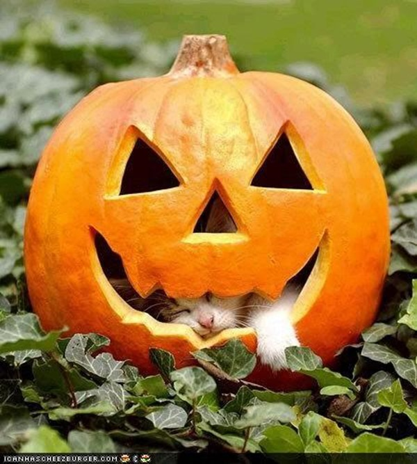 Halloween Theme  (6)